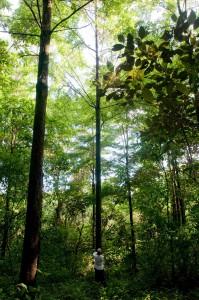 Waldmenschen eG